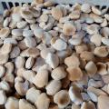 Fabrica de biscoito coquinho