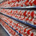 Fabrica de pao hot dog