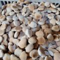 Fabricação de biscoitos e bolachas